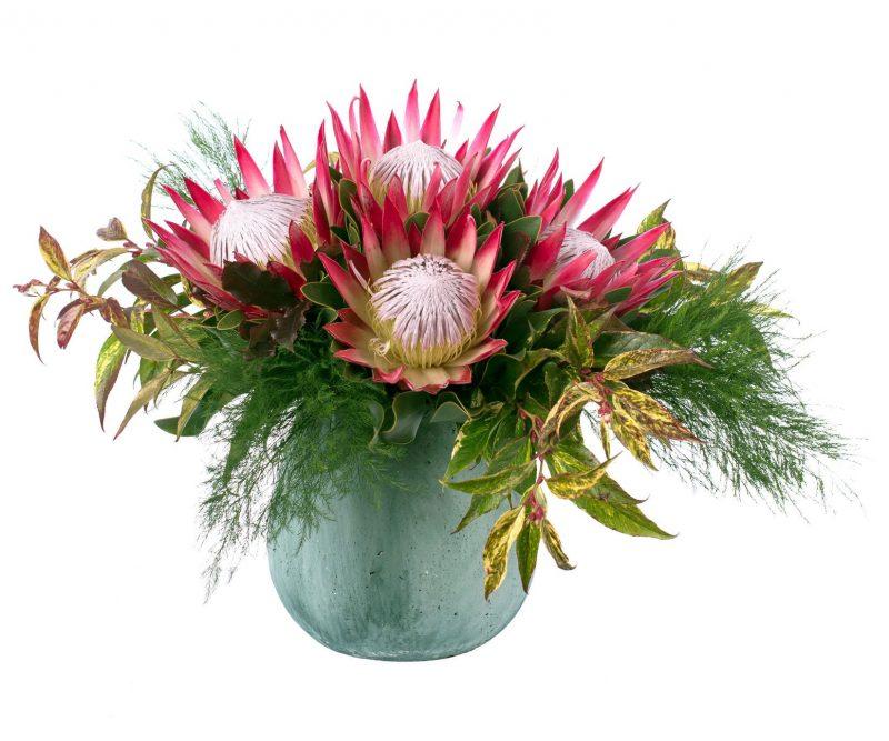 Ramo Nº 02: Protea,verdes