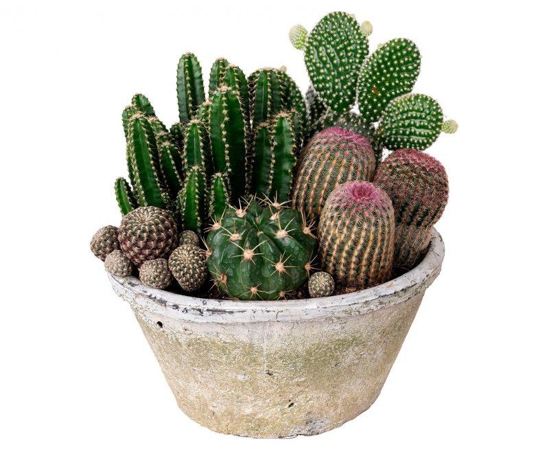 Planta Nº 25 Cactus mix en maceta de cerámi - Margarita se llama mi amorca
