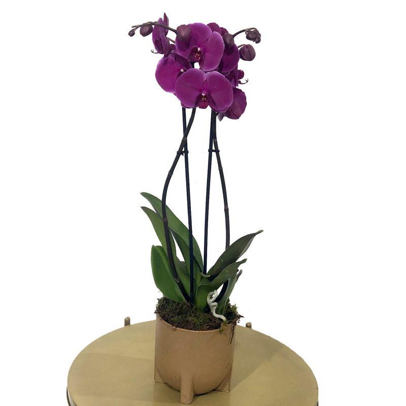 Orquídea - Floristería Margarita se llama mi amor