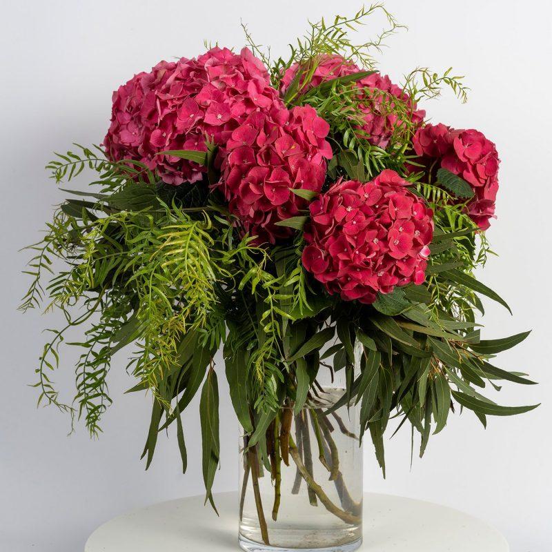 Hortensias cereza - venta de flores Margarita se llama mi amor