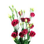 Lisianthus Red