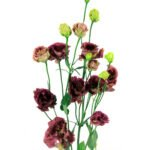 Lisianthus Rosanne Brown - Floristería Margarita se llama mi amor