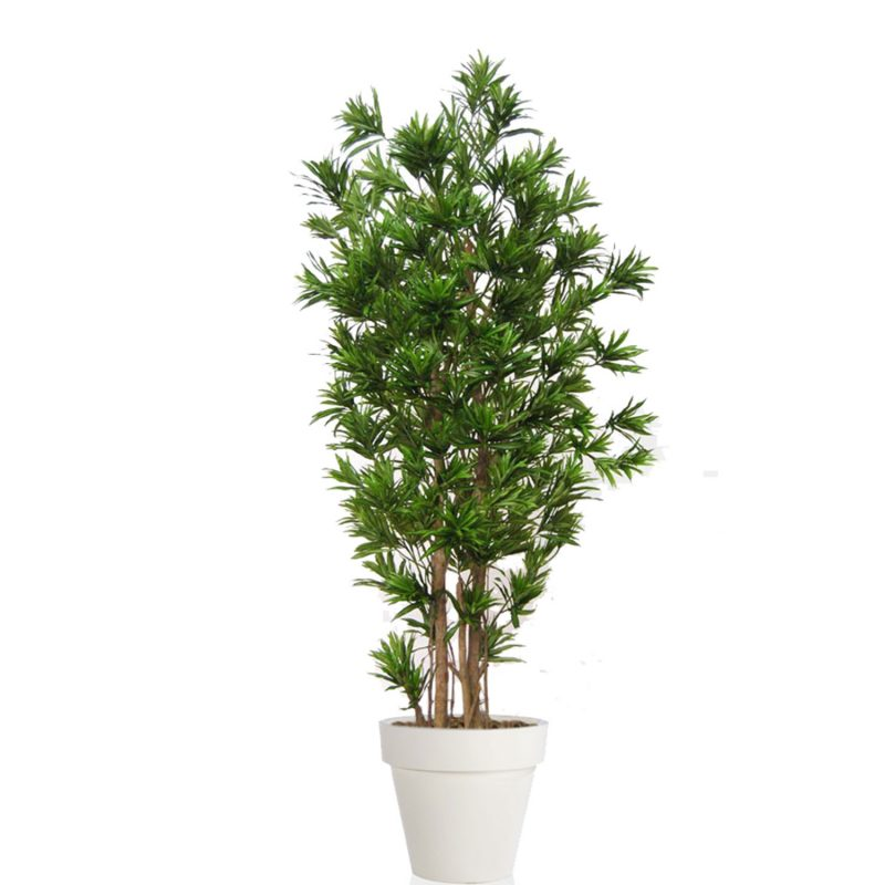 Dracaena-Reflexa-Multistep-260-cm-Green-V4008A13