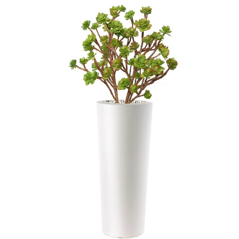 Echeveria-Bush-Lux-150-cm-Multicolor-V5419M01