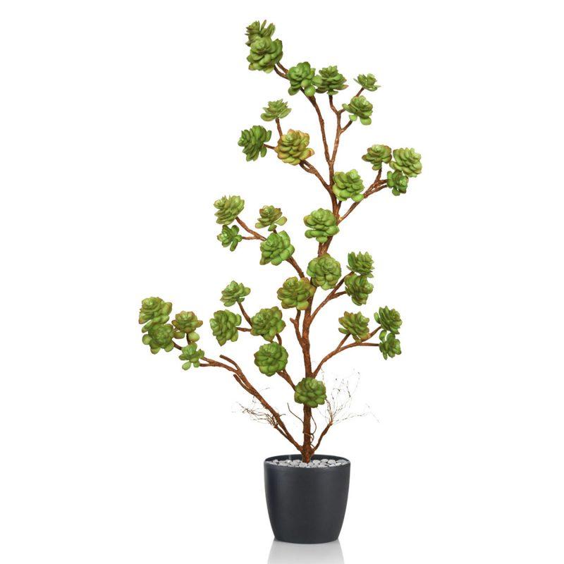 Echeveria-Plant-80-cm-Multicolor-V5421M02