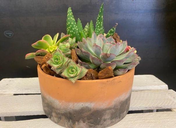 Taller floral plantas suculentas - Margarita se llama mi amor